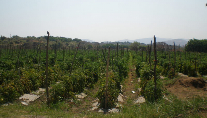 Vineyards and Crops