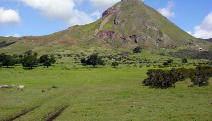 Fields and Grasslands
